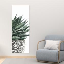 Canvas 16 x 48 - Zebra plant succulent