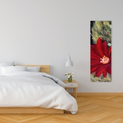 Canvas 16 x 48 - Echinopsis red cactus flower