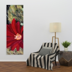 Canvas 20 x 60 - Echinopsis red cactus flower