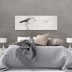 Canvas 20 x 60 - Semipalmated sandpiper