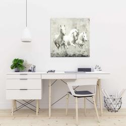 Canvas 24 x 24 - Three white horses running