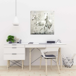 Canvas 24 x 24 - Two white horse running