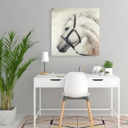 Toile 24 x 24 - Darius le cheval blanc