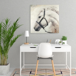 Canvas 24 x 24 - Darius the white horse