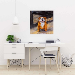 Canvas 24 x 24 - Smiling bulldog