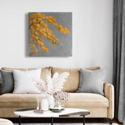 Canvas 24 x 24 - Golden wattle plant