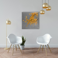 Canvas 24 x 24 - Golden wattle plant with pugg ball flowers