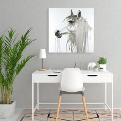 Canvas 24 x 24 - Beautiful white horse