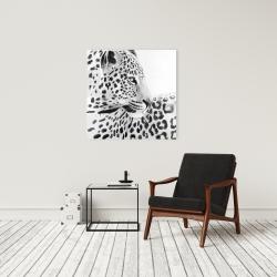 Canvas 24 x 24 - Beautiful leopard