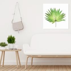 Canvas 24 x 24 - Petticoat palm