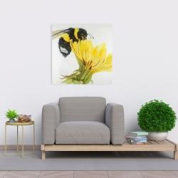 Canvas 24 x 24 - Little bumblebee on a dandelion
