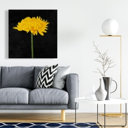 Canvas 24 x 24 - Chrysanthemum