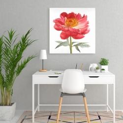Canvas 24 x 24 - Pink peony