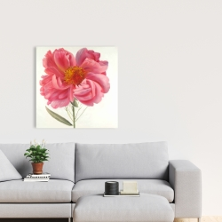 Canvas 24 x 24 - Pink peony flower