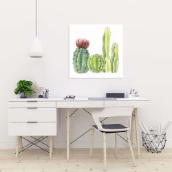 Canvas 24 x 24 - Four little cactus