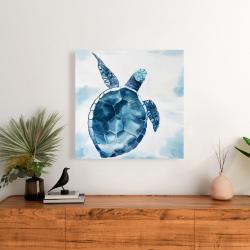 Canvas 24 x 24 - Blue turtle