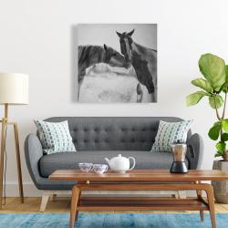 Canvas 24 x 24 - Horses lover
