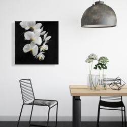 Canvas 24 x 24 - Beautiful orchids