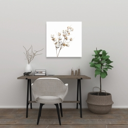 Canvas 24 x 24 - A branch of cotton flowers