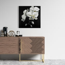 Canvas 24 x 24 - White orchids