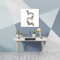 Canvas 24 x 24 - Small dachshund dog