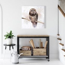 Canvas 24 x 24 - Barred owl