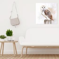 Canvas 24 x 24 - Barn owl
