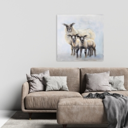 Canvas 24 x 24 - Sheep family