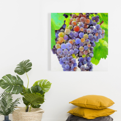 Canvas 24 x 24 - Bunch of grapes