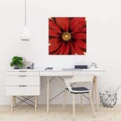 Canvas 24 x 24 - Red daisy