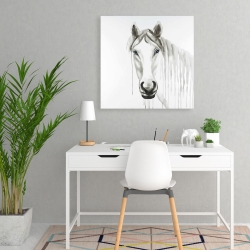 Canvas 24 x 24 - Solitary white horse