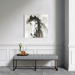 Canvas 24 x 24 - Beautiful wild horse