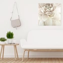 Canvas 24 x 24 - Delicate chrysanthemum