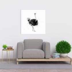 Canvas 24 x 24 - Proud ostrich