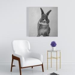 Canvas 24 x 24 - Funny gray bunny