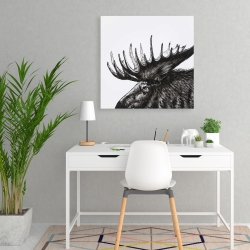 Canvas 24 x 24 - Moose plume