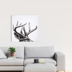 Canvas 24 x 24 - Roe deer plume