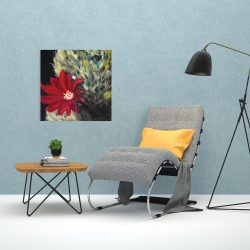 Canvas 24 x 24 - Echinopsis red cactus flower