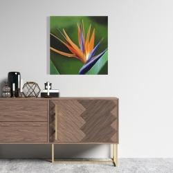 Canvas 24 x 24 - Bird of paradise flower