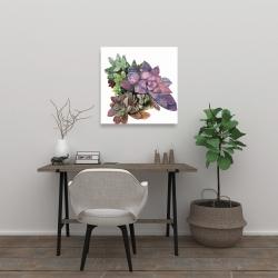 Canvas 24 x 24 - Succulent plant