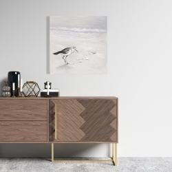 Canvas 24 x 24 - Semipalmated sandpiper