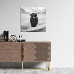 Canvas 24 x 24 - Monochrome highland cow