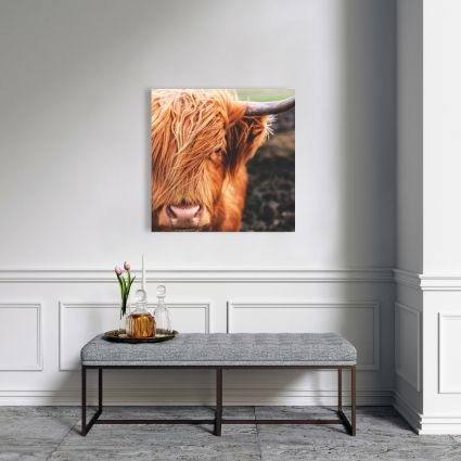 Portrait highland cow