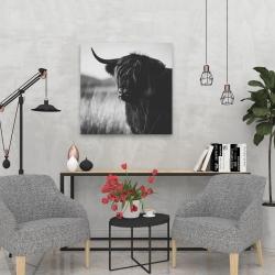 Canvas 24 x 24 - Beautiful monochrome highland cow