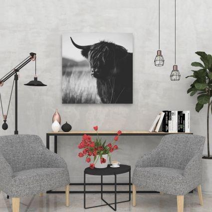 Beautiful monochrome highland cow