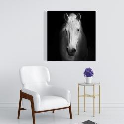Canvas 24 x 24 - Monochrome horse