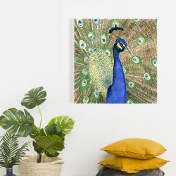 Canvas 24 x 24 - Peacock