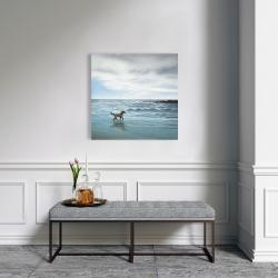 Canvas 24 x 24 - Dog on the beach
