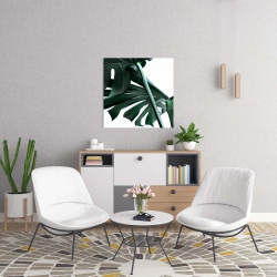 Canvas 24 x 24 - Monstera deliciosa