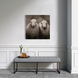 Canvas 24 x 24 - Sheep sepia